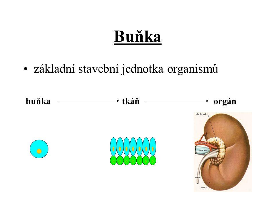 Buňka základní stavební jednotka organismů buňkatkáňorgán