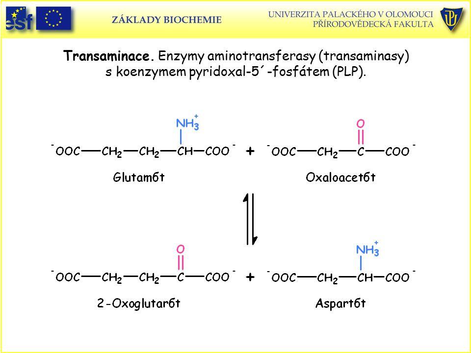 Transaminace. Enzymy aminotransferasy (transaminasy) s koenzymem pyridoxal-5´-fosfátem (PLP).