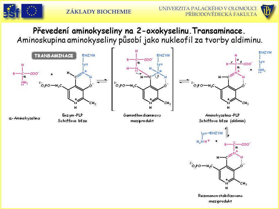 Převedení aminokyseliny na 2-oxokyselinu.Transaminace. Aminoskupina aminokyseliny působí jako nukleofil za tvorby aldiminu.