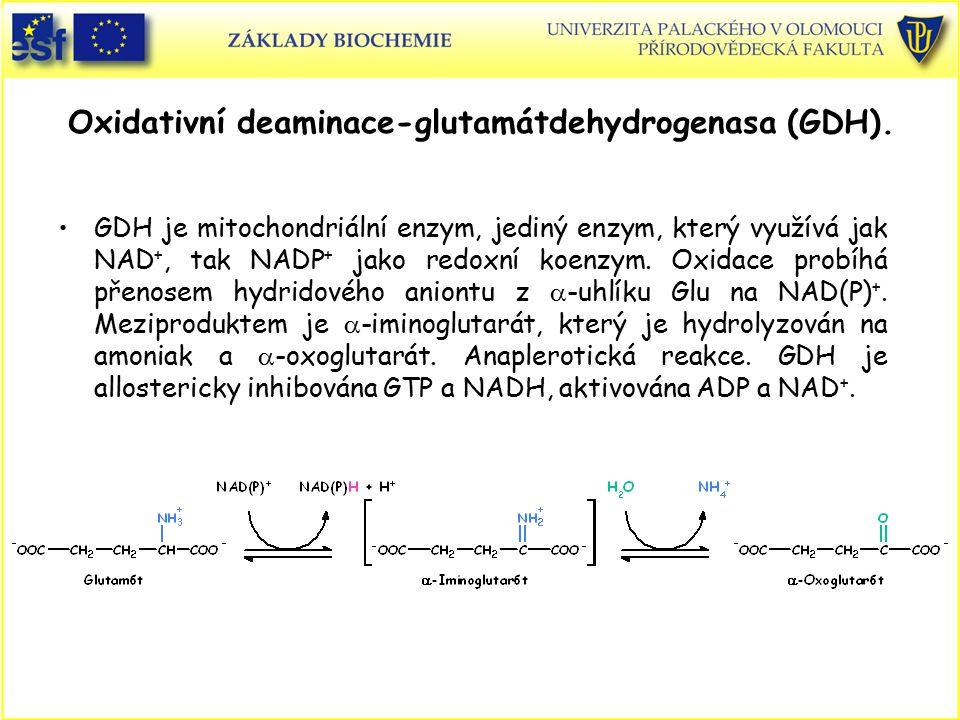 Oxidativní deaminace-glutamátdehydrogenasa (GDH). GDH je mitochondriální enzym, jediný enzym, který využívá jak NAD +, tak NADP + jako redoxní koenzym