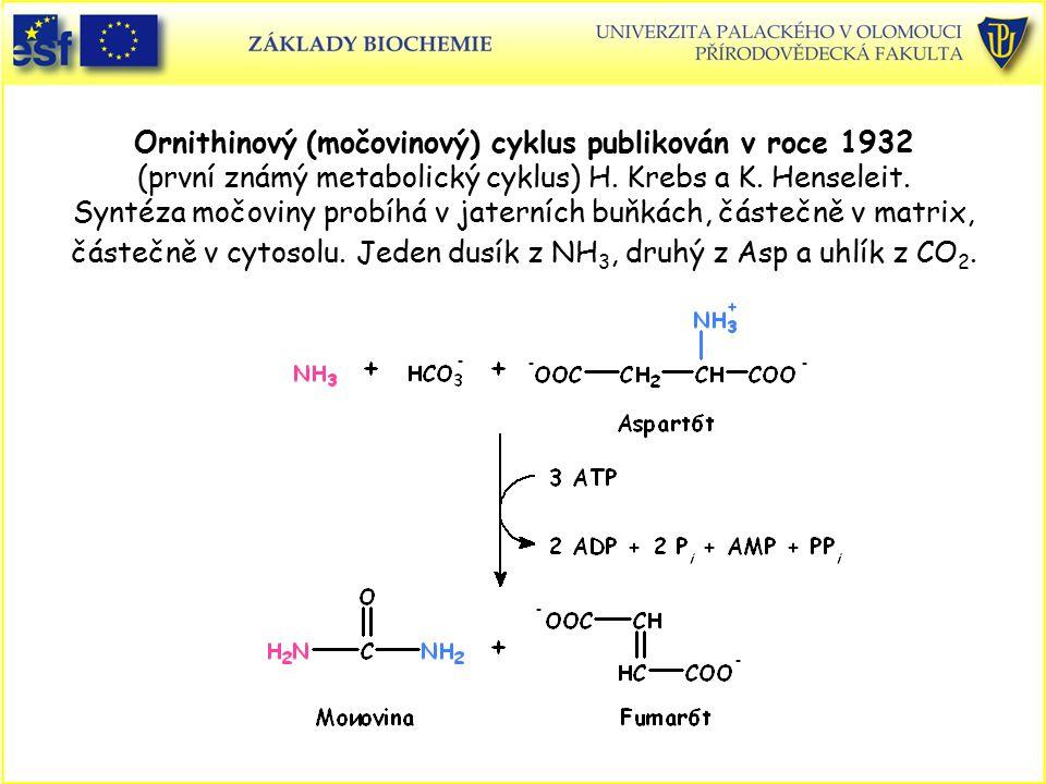 Ornithinový (močovinový) cyklus publikován v roce 1932 (první známý metabolický cyklus) H. Krebs a K. Henseleit. Syntéza močoviny probíhá v jaterních