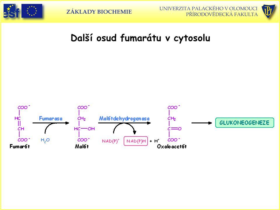 Další osud fumarátu v cytosolu