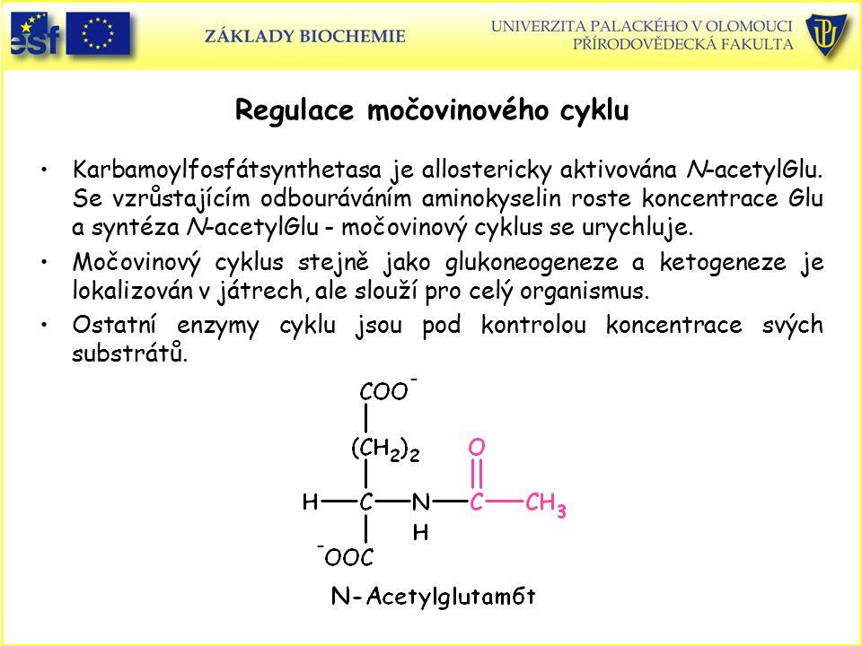 Regulace močovinového cyklu Karbamoylfosfátsynthetasa je allostericky aktivována N-acetylGlu. Se vzrůstajícím odbouráváním aminokyselin roste koncentr