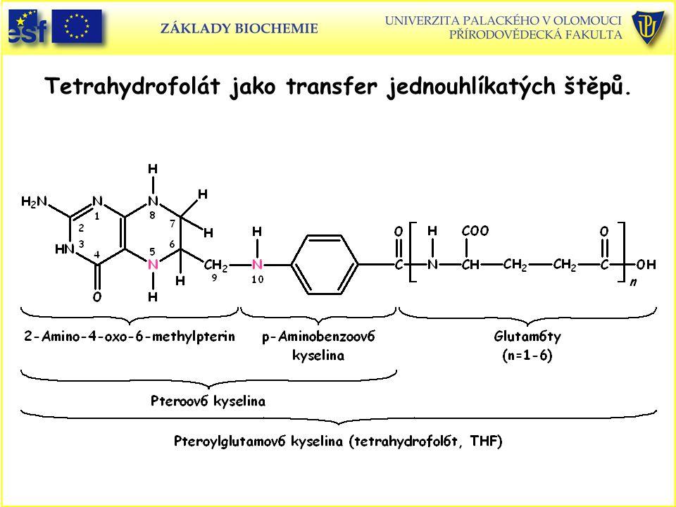 Tetrahydrofolát jako transfer jednouhlíkatých štěpů.