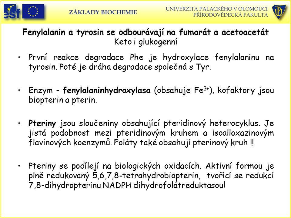 Fenylalanin a tyrosin se odbourávají na fumarát a acetoacetát Keto i glukogenní První reakce degradace Phe je hydroxylace fenylalaninu na tyrosin. Pot