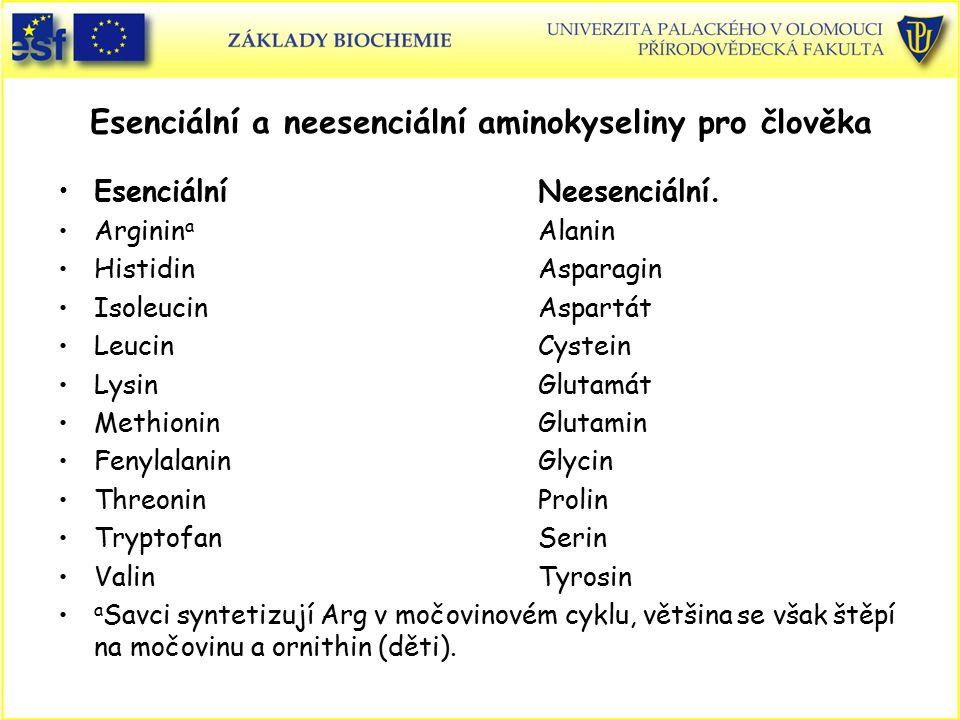 Esenciální a neesenciální aminokyseliny pro člověka EsenciálníNeesenciální. Arginin a Alanin HistidinAsparagin IsoleucinAspartát LeucinCystein LysinGl