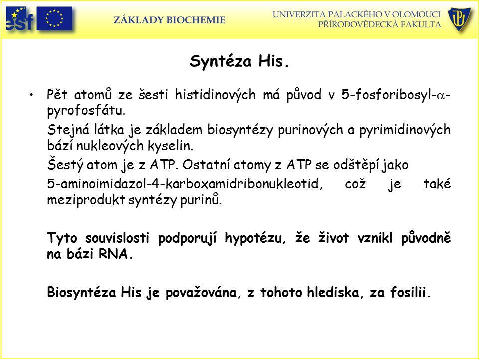 Syntéza His. Pět atomů ze šesti histidinových má původ v 5-fosforibosyl-  - pyrofosfátu. Stejná látka je základem biosyntézy purinových a pyrimidinov