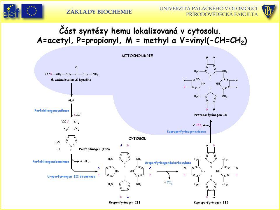 Část syntézy hemu lokalizovaná v cytosolu. A=acetyl, P=propionyl, M = methyl a V=vinyl(-CH=CH 2 )