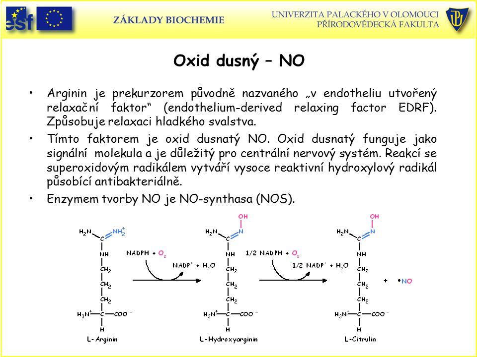 """Oxid dusný – NO Arginin je prekurzorem původně nazvaného """"v endotheliu utvořený relaxační faktor"""" (endothelium-derived relaxing factor EDRF). Způsobuj"""