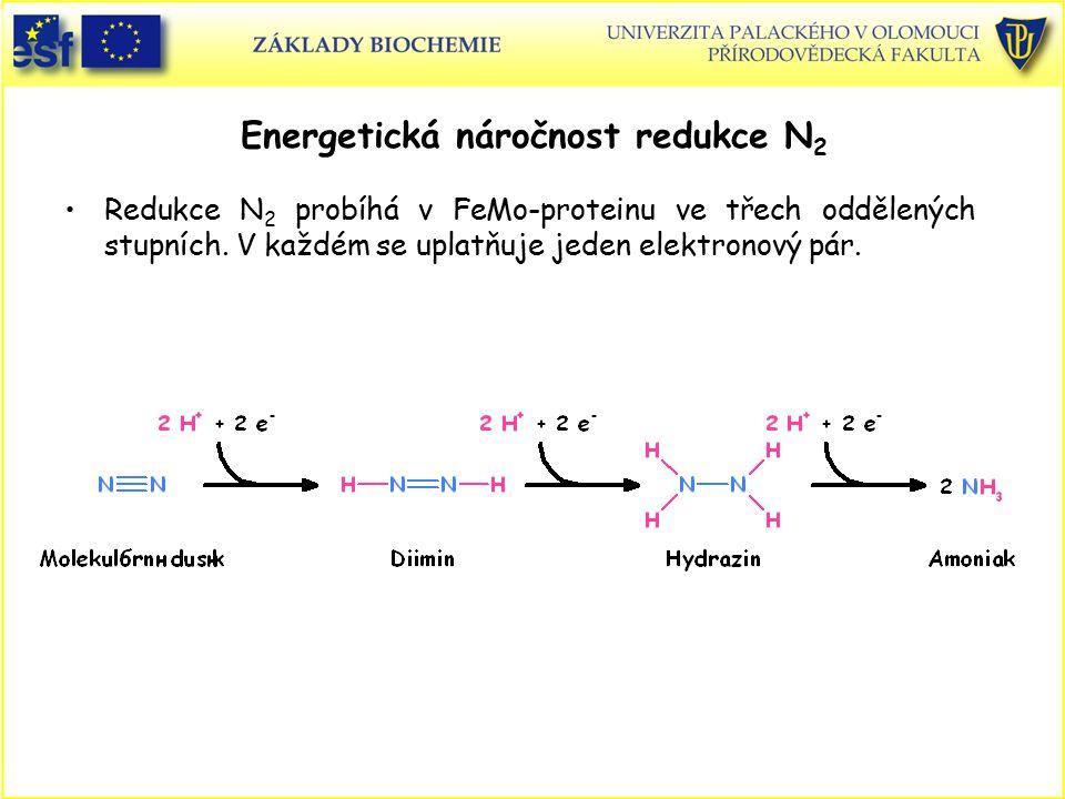 Energetická náročnost redukce N 2 Redukce N 2 probíhá v FeMo-proteinu ve třech oddělených stupních. V každém se uplatňuje jeden elektronový pár.
