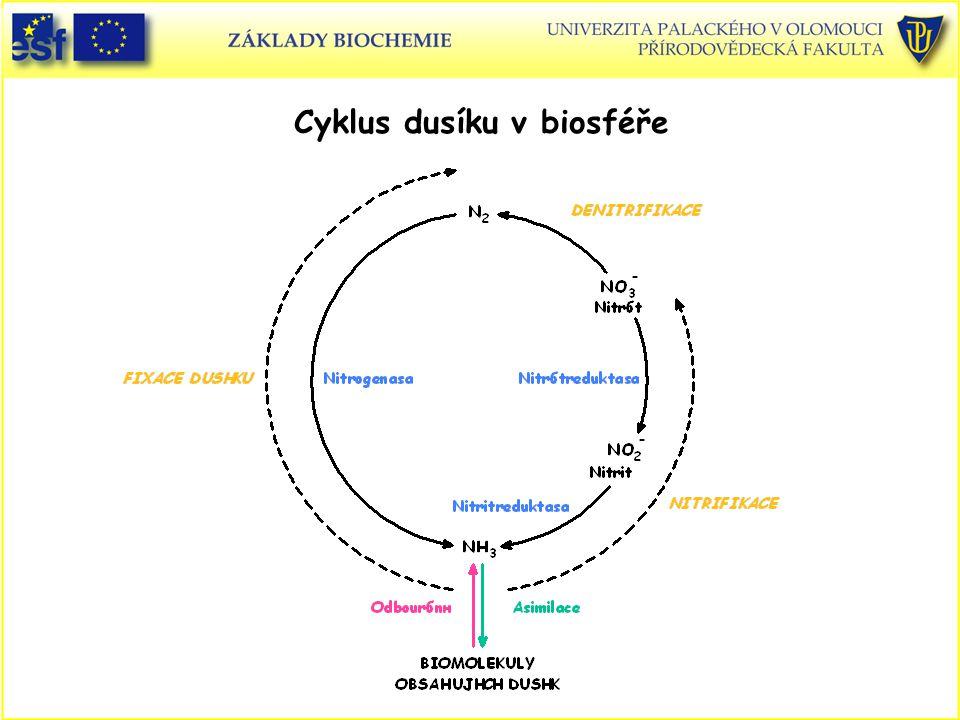 Cyklus dusíku v biosféře