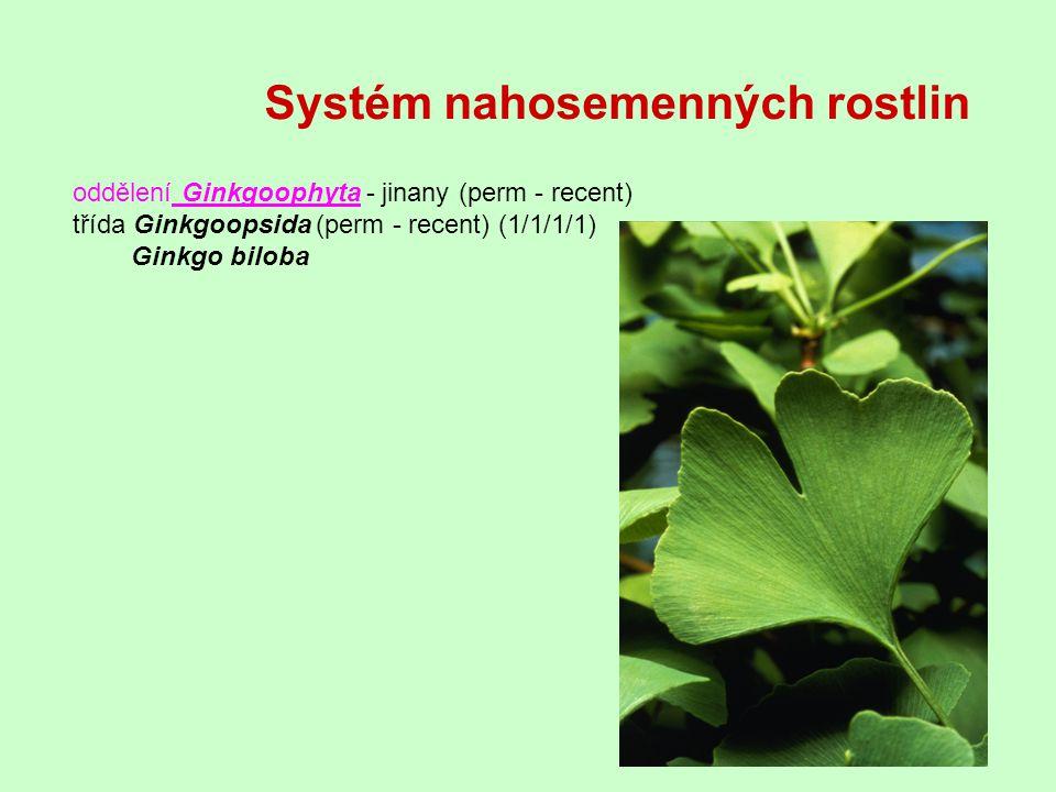 oddělení Ginkgoophyta - jinany (perm - recent) třída Ginkgoopsida (perm - recent) (1/1/1/1) Ginkgo biloba Systém nahosemenných rostlin