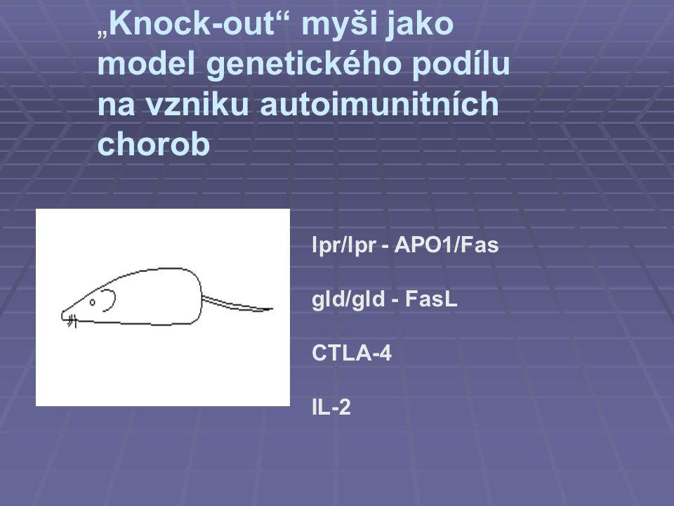 """""""Knock-out"""" myši jako model genetického podílu na vzniku autoimunitních chorob lpr/lpr - APO1/Fas gld/gld - FasL CTLA-4 IL-2"""