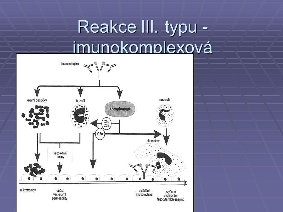 Reakce IV.typu- pozdní přecitlivělost Th1 IFNg IL-2 Podtyp IV - buněč- ná cytotoxicita aktivace CD8+ cytotoxických lymfocytů destrukce tkání (perforin, cytokiny)