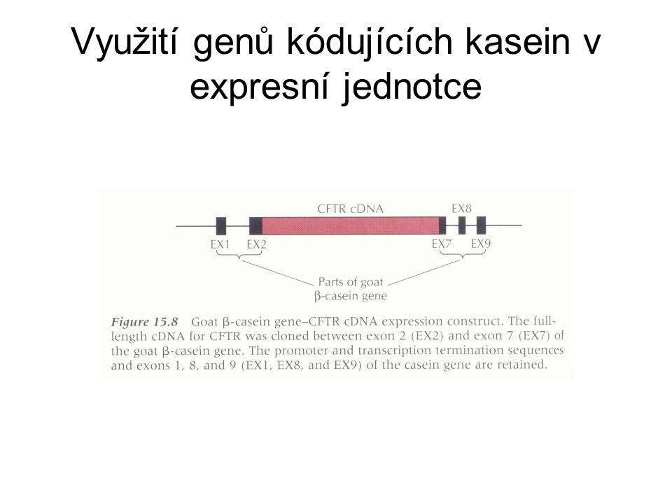 Využití genů kódujících kasein v expresní jednotce
