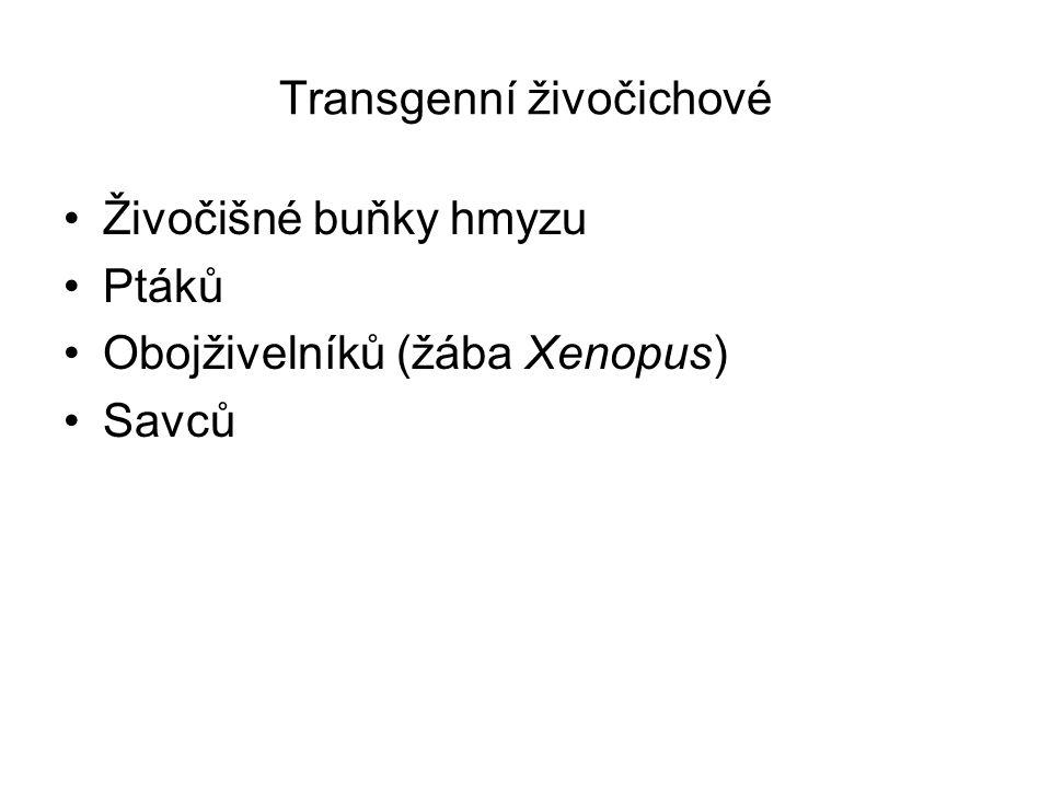 Transgenní živočichové Živočišné buňky hmyzu Ptáků Obojživelníků (žába Xenopus) Savců