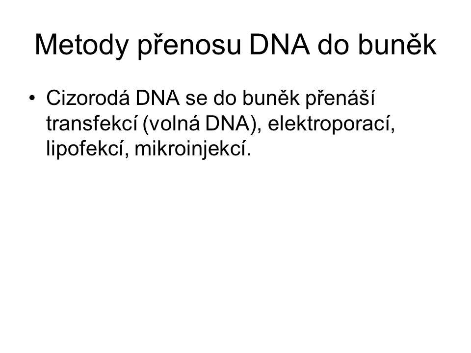 Metody přenosu DNA do buněk Cizorodá DNA se do buněk přenáší transfekcí (volná DNA), elektroporací, lipofekcí, mikroinjekcí.