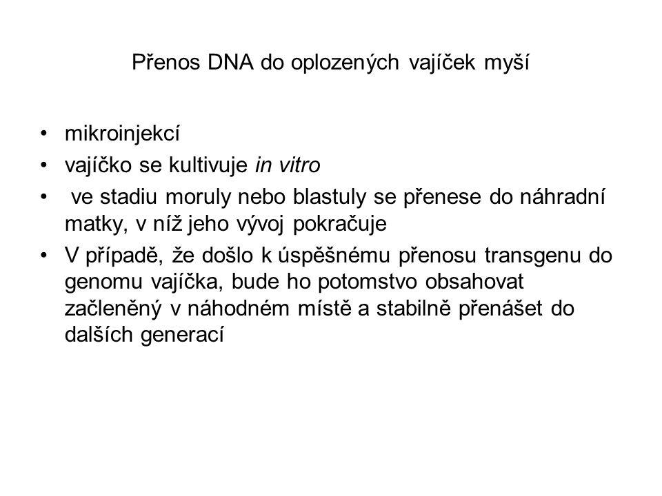 Genová terapie in vitro (ex vivo) Vnášení genů do cílových buněk se provádí mimo tělo pacienta.
