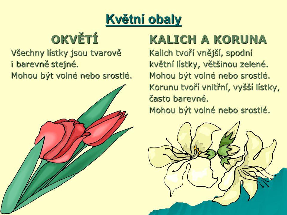 Květní obaly OKVĚTÍ Všechny lístky jsou tvarově i barevně stejné.
