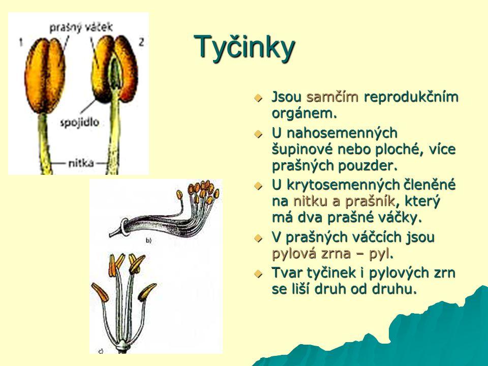 Tyčinky  Jsou samčím reprodukčním orgánem.
