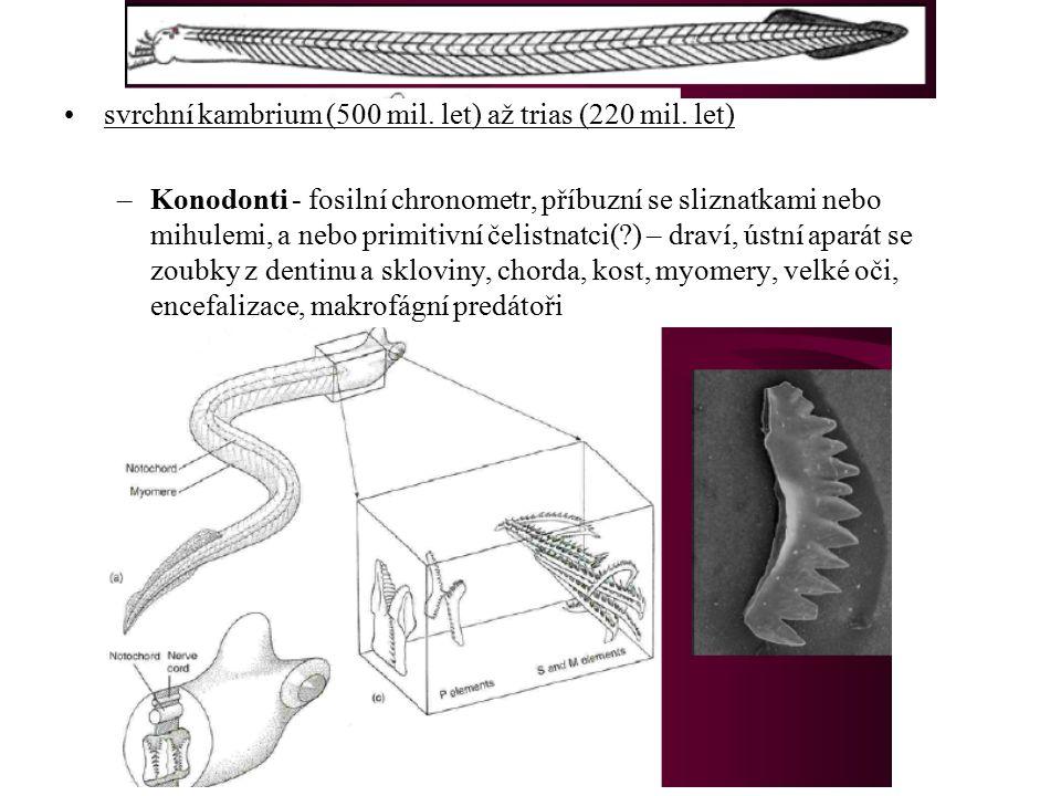 """Thaliacea - salpy Appendicularia (Larvacea, Copelata) - vršenky 50, pelagičtí, soudečkovité tělo, metageneze, i kolonie Pyrosomida-ohnivky, Cyclomyaria-kruhosvalí, Desmomyaria-pásmosvalí 60, pelagičtí, neotenie, jen solitérní, volně ve schránkách se síťkami, 3 čeledi - Oikopleuridae, Fritillariidae, Kowalevskiidae """"Ascidiacea – sumky (parafylie) 1900, přisedlí, vakovité tělo, i kolonie Aplousobranchiata – pospolitky Phlebobranchiata – pravé sumky Stolidobranchiata - zřasenky"""