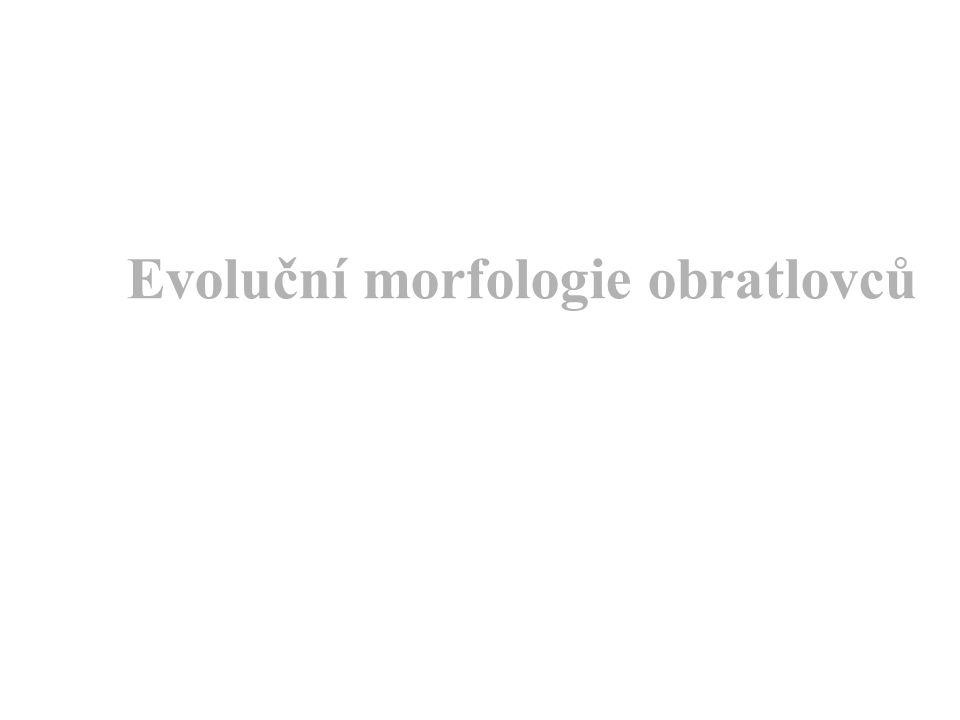 Evoluční morfologie obratlovců