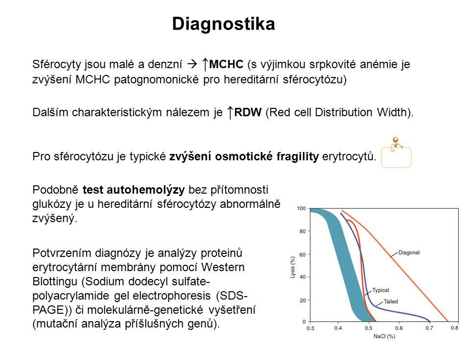 Diagnostika Sférocyty jsou malé a denzní  ↑ MCHC (s výjimkou srpkovité anémie je zvýšení MCHC patognomonické pro hereditární sférocytózu) Dalším char