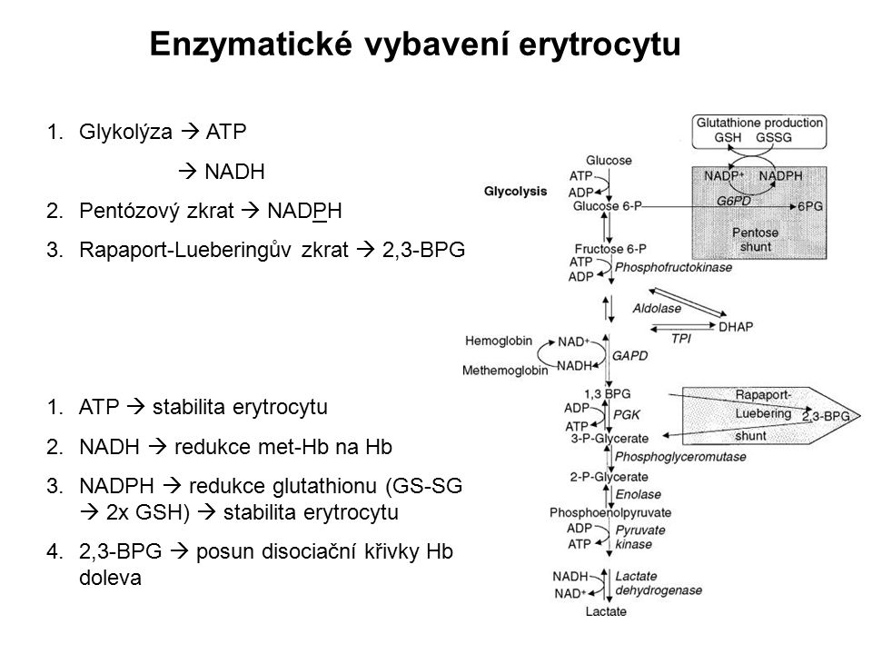 Enzymatické vybavení erytrocytu 1.Glykolýza  ATP  NADH 2.Pentózový zkrat  NADPH 3.Rapaport-Lueberingův zkrat  2,3-BPG 1.ATP  stabilita erytrocytu