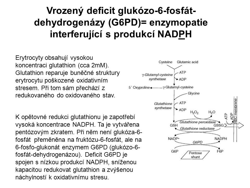 Vrozený deficit glukózo-6-fosfát- dehydrogenázy (G6PD)= enzymopatie interferující s produkcí NADPH Erytrocyty obsahují vysokou koncentraci glutathion