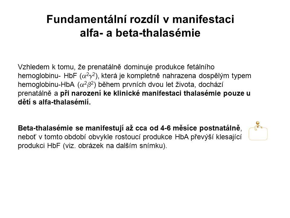Fundamentální rozdíl v manifestaci alfa- a beta-thalasémie Vzhledem k tomu, že prenatálně dominuje produkce fetálního hemoglobinu- HbF (  2  2 ), kt