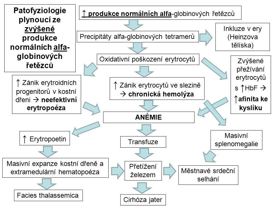 ↑ produkce normálních alfa-globinových řetězců Precipitáty alfa-globinových tetramerů Oxidativní poškození erytrocytů ↑ Zánik erytroidních progenitorů