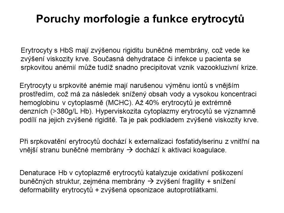 Poruchy morfologie a funkce erytrocytů Erytrocyty s HbS mají zvýšenou rigiditu buněčné membrány, což vede ke zvýšení viskozity krve. Současná dehydrat