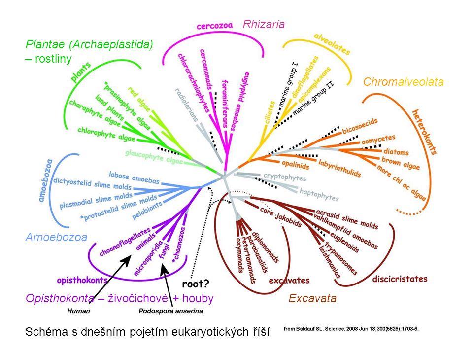 při pohlavním rozmnožování u většiny vlastních hub není spojena plazmogamie s karyogamií – karyogamie následuje s určitým zpožděním a do životního cyklu je vložena dikaryotická fáze (označovaná n+n), charakteristická tzv.