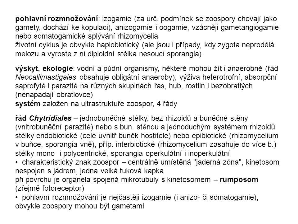pohlavní rozmnožování: izogamie (za urč. podmínek se zoospory chovají jako gamety, dochází ke kopulaci), anizogamie i oogamie, vzácněji gametangiogami