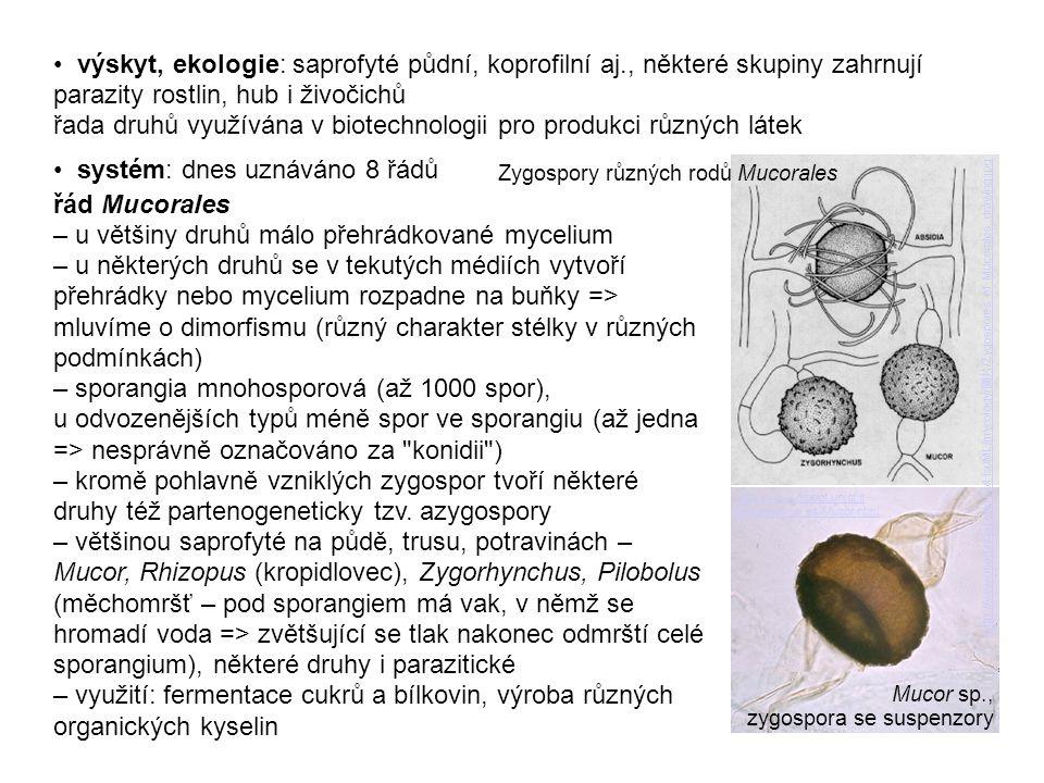 výskyt, ekologie: saprofyté půdní, koprofilní aj., některé skupiny zahrnují parazity rostlin, hub i živočichů řada druhů využívána v biotechnologii pr