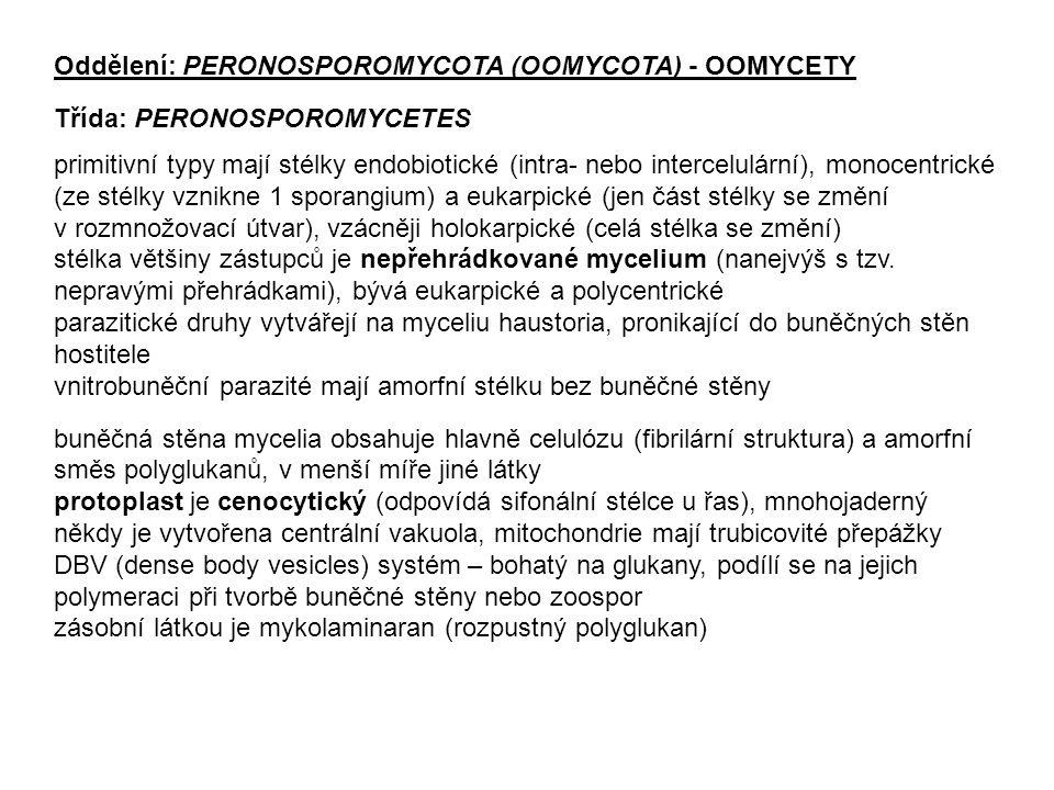 Oddělení: PERONOSPOROMYCOTA (OOMYCOTA) - OOMYCETY Třída: PERONOSPOROMYCETES primitivní typy mají stélky endobiotické (intra- nebo intercelulární), mon