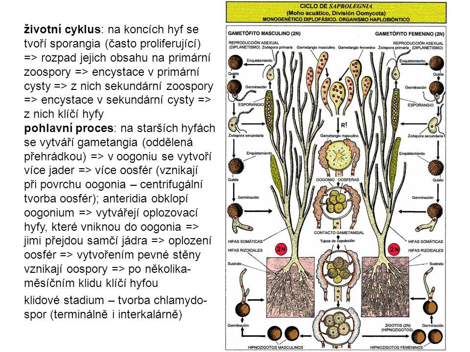 životní cyklus: na koncích hyf se tvoří sporangia (často proliferující) => rozpad jejich obsahu na primární zoospory => encystace v primární cysty =>
