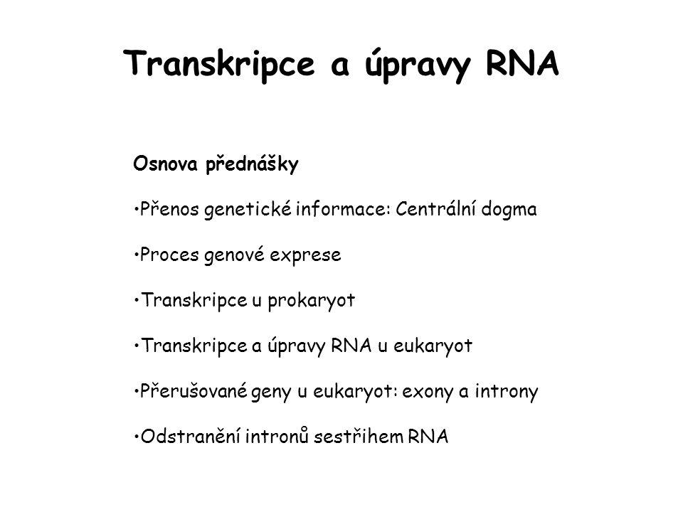 Terminologie transkripce Transkripční jednotka úsek DNA, jehož transkripcí vzniká jediná molekula RNA může a nemusí být ekvivalentní genu (u prokaryot běžně zahrnuje několik genů) Upstream (proti směru transkripce) a downstream (po směru transkripce) oblasti transkriptu RNA, které jsou umístěny směrem k 5´konci (upstream, mínus) nebo 3´konci (downstream, plus) vzhledem k určitému referenčnímu bodu termíny se používají i pro ekvivalentní sekvence DNA místo iniciace transkripce se značí +1