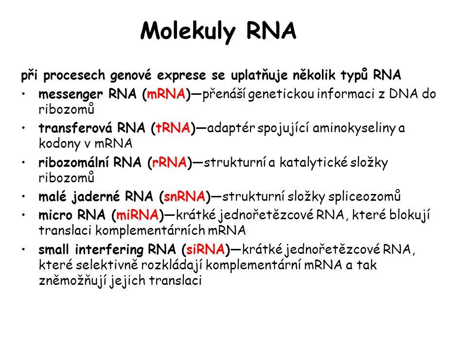 Molekuly RNA při procesech genové exprese se uplatňuje několik typů RNA messenger RNA (mRNA)—přenáší genetickou informaci z DNA do ribozomů transferov