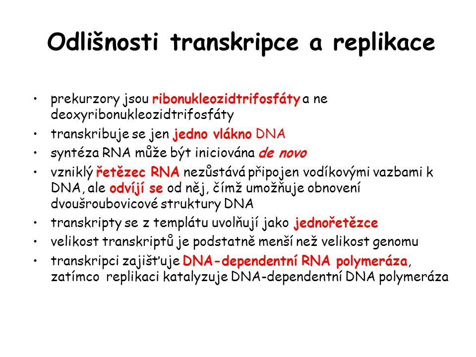 Odlišnosti transkripce a replikace prekurzory jsou ribonukleozidtrifosfáty a ne deoxyribonukleozidtrifosfáty transkribuje se jen jedno vlákno DNA synt