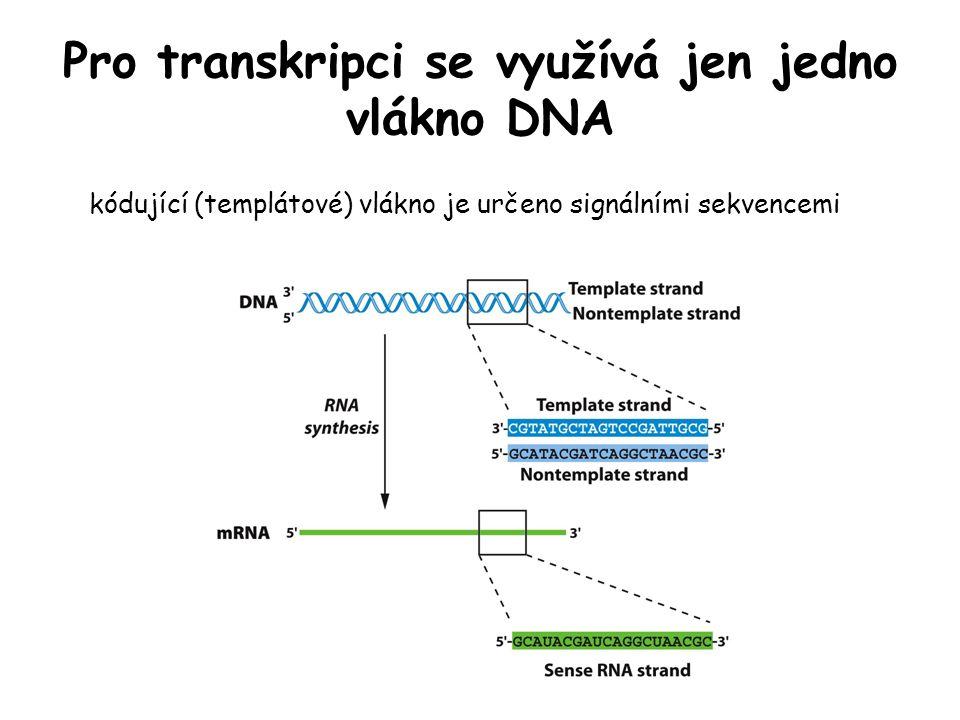 Pro transkripci se využívá jen jedno vlákno DNA kódující (templátové) vlákno je určeno signálními sekvencemi