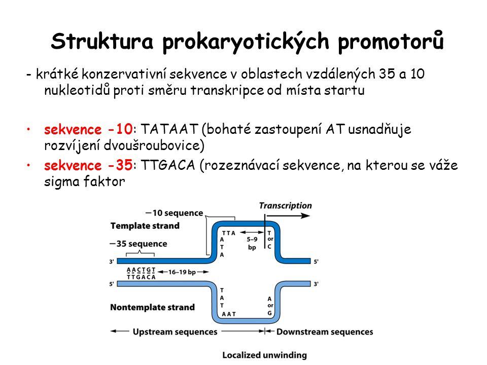 Struktura prokaryotických promotorů - krátké konzervativní sekvence v oblastech vzdálených 35 a 10 nukleotidů proti směru transkripce od místa startu