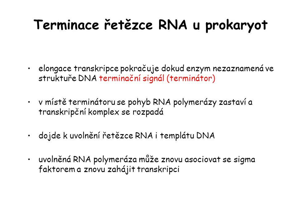 Terminace řetězce RNA u prokaryot elongace transkripce pokračuje dokud enzym nezaznamená ve struktuře DNA terminační signál (terminátor) v místě termi