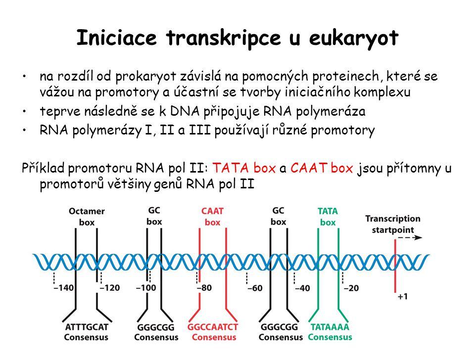 Iniciace transkripce u eukaryot na rozdíl od prokaryot závislá na pomocných proteinech, které se vážou na promotory a účastní se tvorby iniciačního ko