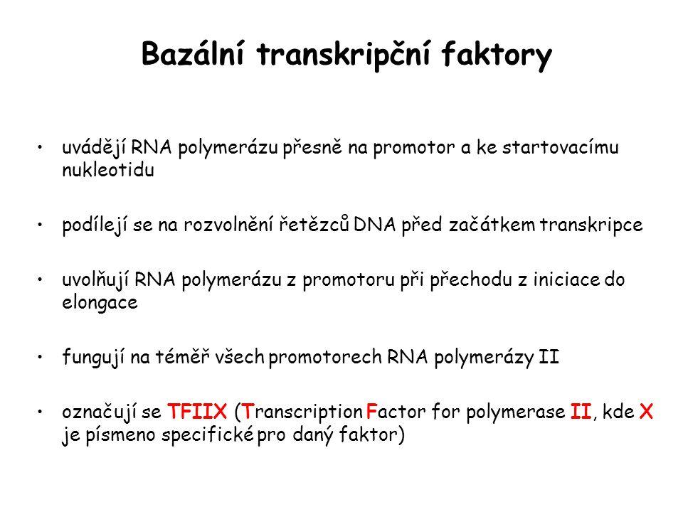 Bazální transkripční faktory uvádějí RNA polymerázu přesně na promotor a ke startovacímu nukleotidu podílejí se na rozvolnění řetězců DNA před začátke
