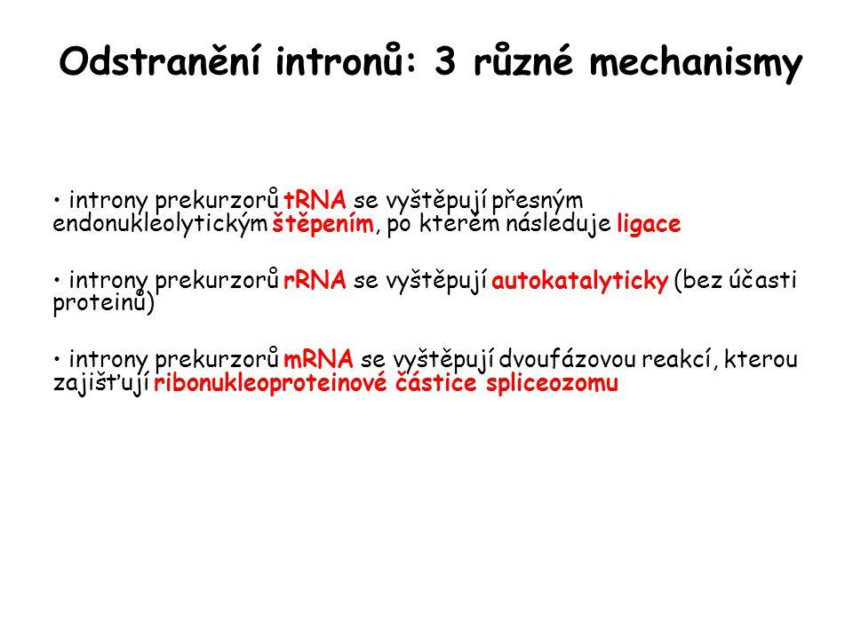 Odstranění intronů: 3 různé mechanismy introny prekurzorů tRNA se vyštěpují přesným endonukleolytickým štěpením, po kterém následuje ligace introny pr