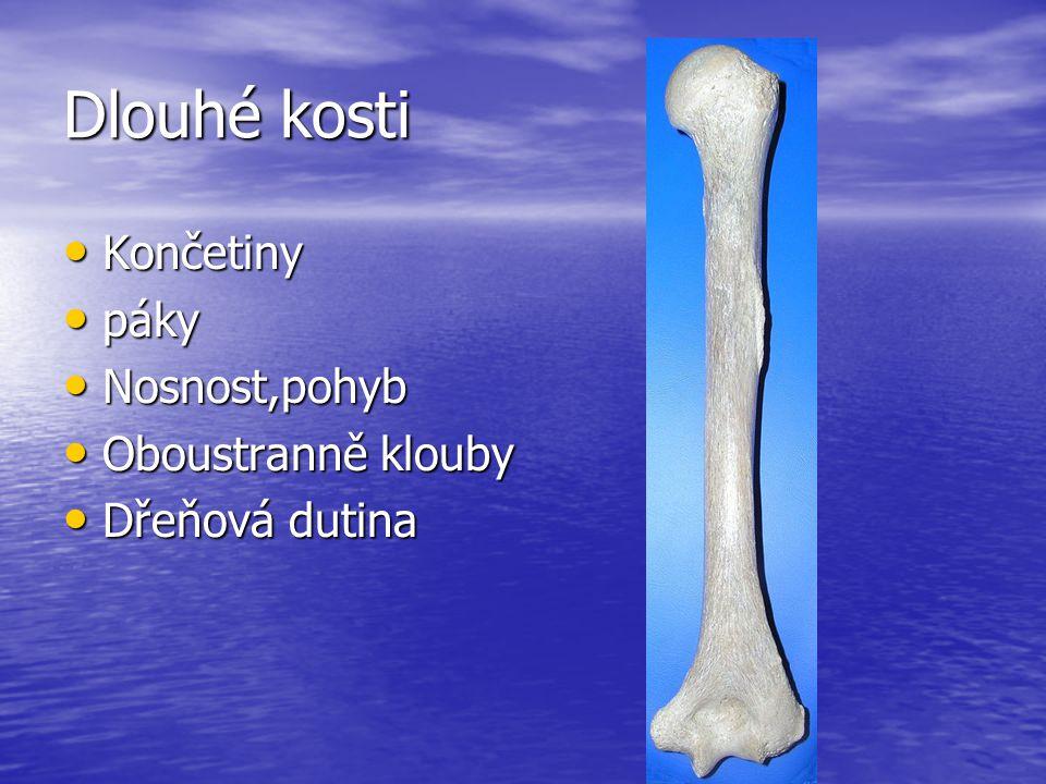 Dlouhé kosti Končetiny Končetiny páky páky Nosnost,pohyb Nosnost,pohyb Oboustranně klouby Oboustranně klouby Dřeňová dutina Dřeňová dutina