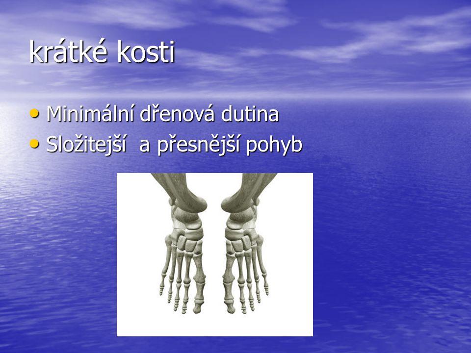 krátké kosti Minimální dřenová dutina Minimální dřenová dutina Složitejší a přesnější pohyb Složitejší a přesnější pohyb