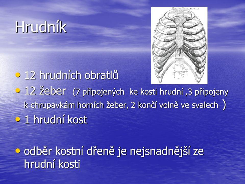 Hrudník 12 hrudních obratlů 12 hrudních obratlů 12 žeber (7 připojených ke kosti hrudní,3 připojeny k chrupavkám horních žeber, 2 končí volně ve svalech ) 12 žeber (7 připojených ke kosti hrudní,3 připojeny k chrupavkám horních žeber, 2 končí volně ve svalech ) 1 hrudní kost 1 hrudní kost odběr kostní dřeně je nejsnadnější ze hrudní kosti odběr kostní dřeně je nejsnadnější ze hrudní kosti