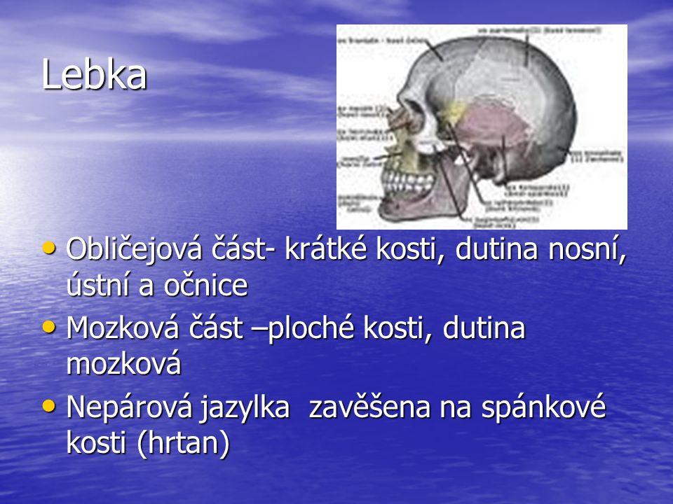 Lebka Obličejová část- krátké kosti, dutina nosní, ústní a očnice Obličejová část- krátké kosti, dutina nosní, ústní a očnice Mozková část –ploché kosti, dutina mozková Mozková část –ploché kosti, dutina mozková Nepárová jazylka zavěšena na spánkové kosti (hrtan) Nepárová jazylka zavěšena na spánkové kosti (hrtan)